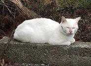 迷い猫来訪中…
